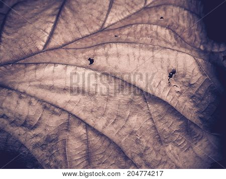 Beautiful dry leaf, Selective focus and Close up.