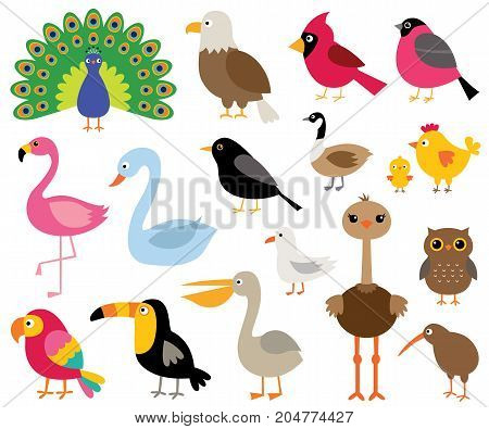 Colorful cartoon birds, isolated illustrations set (peacock, eagle, flamingo, toucan ad more)