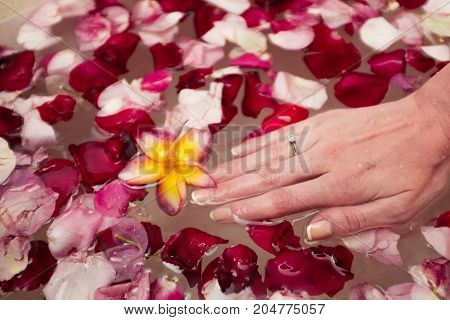 red and pink rose petal on water with woman's hand with an engagement ring