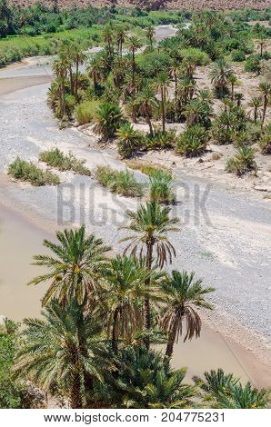 Palm lined dry river bed near Tiznit in Morocco, North Africa.