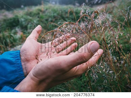 Man hands take dew drops from the grass