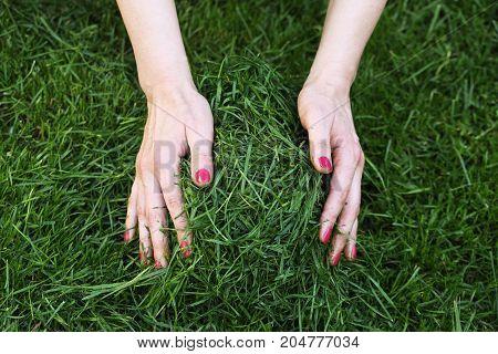 Beautiful women's hands take away the Mown grass