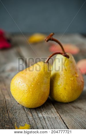 Autumn Harvest Concept -a Couple Of Fresh Ripe Organic Yellow Pears With Water Drops On Rustic Woode