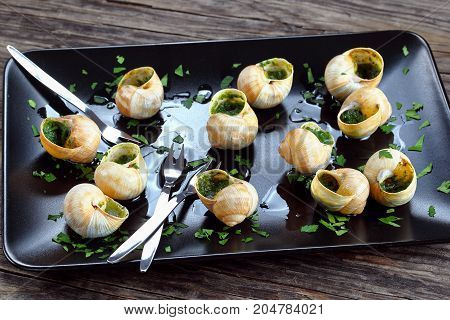 Snails With Herbs Butter Garlic, Close-up