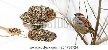 feeders for birds from seeds and fat and bird