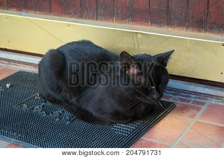 Black Cat sleeping peacefully at front porch