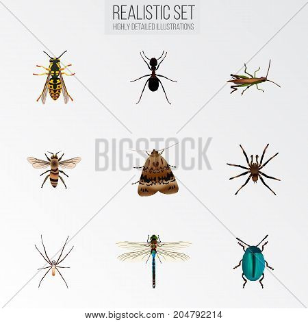 Realistic Arachnid, Damselfly, Wasp And Other Vector Elements