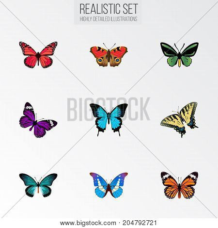 Realistic Tropical Moth, Papilio Ulysses, Azure Peacock And Other Vector Elements