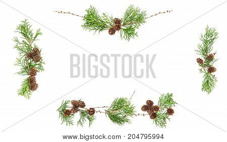 Evergreen tree branches with cones. Christmas background. Floral flat lay banner