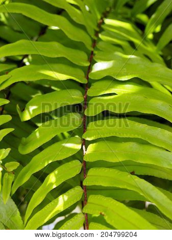 large bright green tropical fern leaf in sunlight