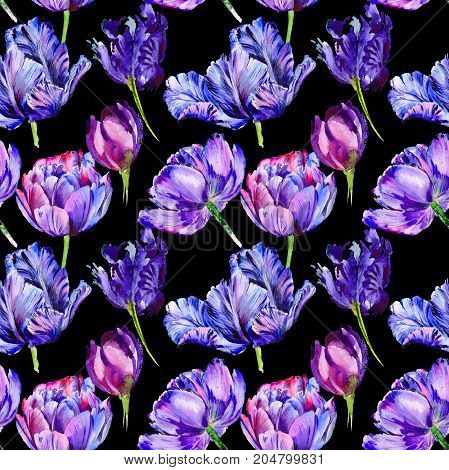 Wildflower tulip flower pattern in a watercolor style. Full name of the plant: purple tulip. Aquarelle wild flower for background, texture, wrapper pattern, frame or border.