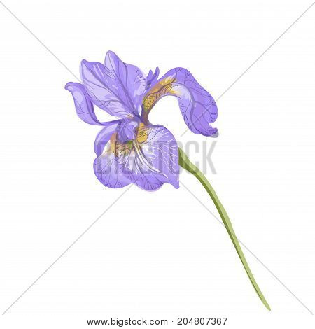 Vintage beautiful tender violet iris vector hand drawing isolated on white background stock art