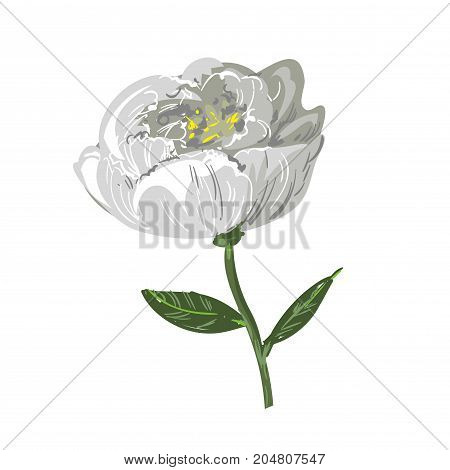 White peony flower isolated on white stock vector
