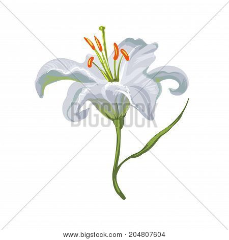 Vector realistic vivid white lily on white stock art