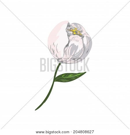 Cotton isolated on the white background. Vector illustration for stock