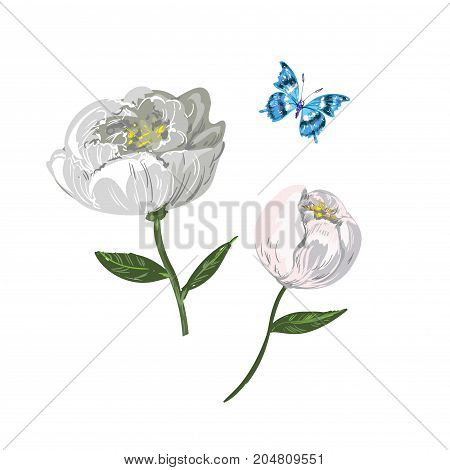 Floral set with white , white Peony, , Hypericum Berries and flying butterfly. Elegant vector illustration in romantic style.