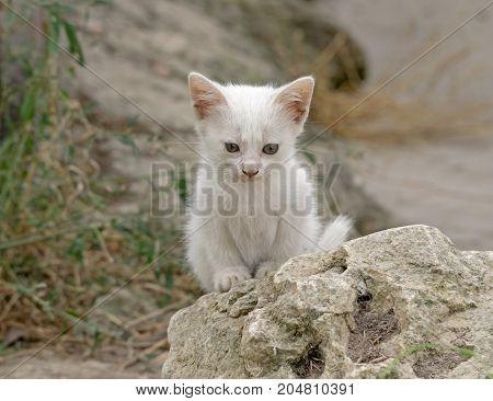 A beautiful little white kitten sits on stone