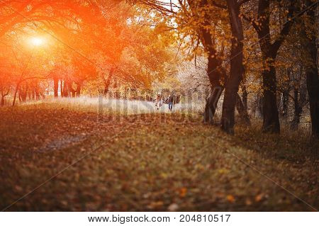 Loving Couple Walks In The Autumn Deciduous Forest In The Rays Of The Setting Sun, Enjoying Nature.
