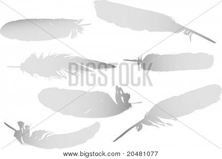 illustration with seven grey feathers isolated on white background