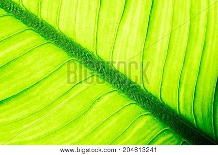 Close up of natural green leaf background tropical foliage texture.