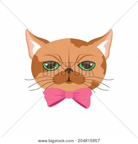 Cute cat in pink bow tie, funny cartoon animal character vector illustration isolated on a white background
