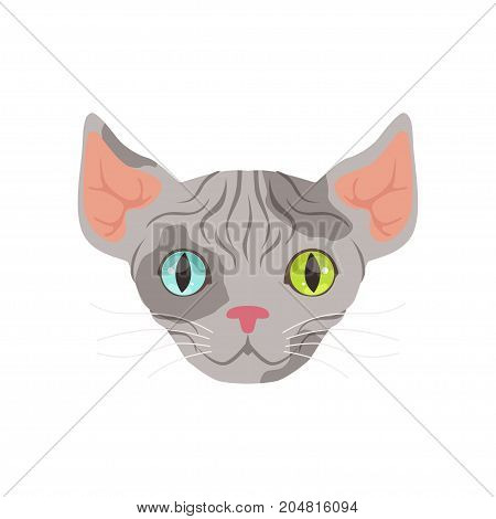 Cute grey sphinx cat with eyes of different colors, funny cartoon animal character vector illustration isolated on a white background