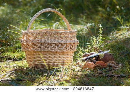Woven basket and a lot of boletus mushroom and knife in forest, horizontal