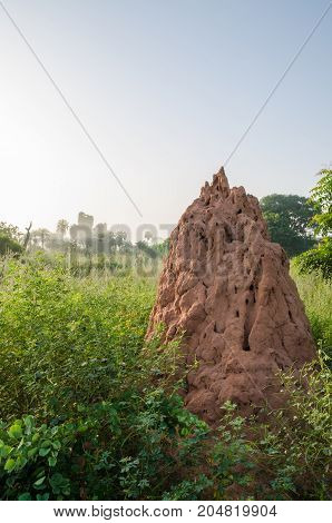 Very large termite hill standing in between high grass in early morning landscape, The Gambia, West Africa.