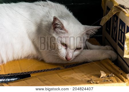 The ugly white cat is sleeping on a brown paper box.