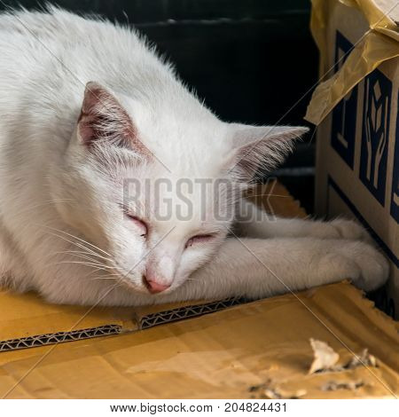 The white cat is sleeping on a brown paper box.
