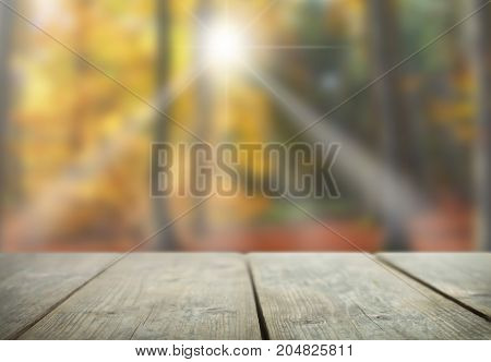 Autumn forest with sunshine overlooking wooden table