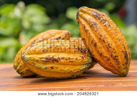 Cacao Fruit, Raw Cacao Beans, Cocoa Pod On Wooden Background