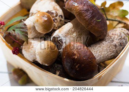 Boletus Edulis, Cepe, Porcini Mushrooms Unwashed On White Wooden Background