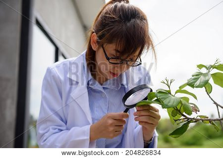 Scientist Woman Check Leaf With Magnifying Glass