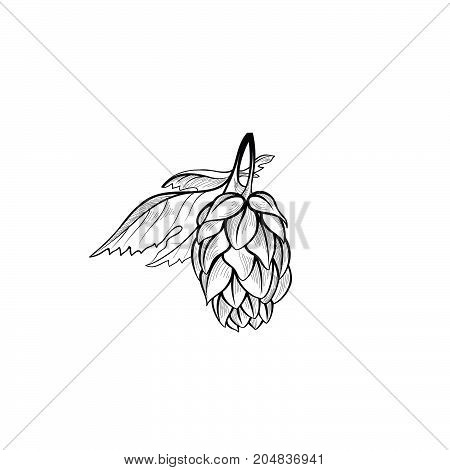 Hops bush. Floral beer icon. Engraving hand drawn brewing design element