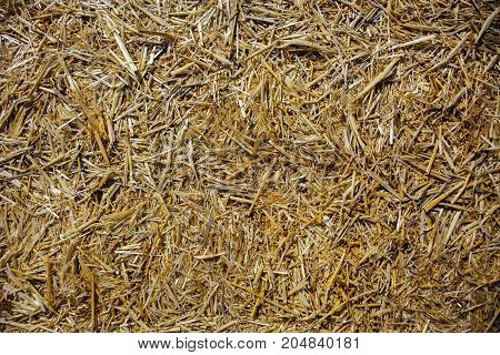 gold hay light pattern, texture, hay background, hay concept, village