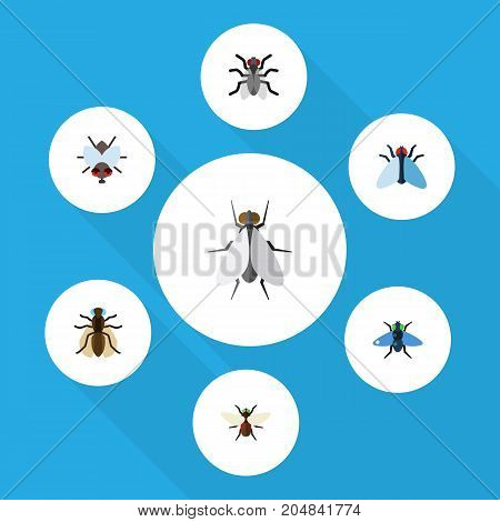 Flat Icon Fly Set Of Bluebottle, Buzz, Mosquito And Other Vector Objects