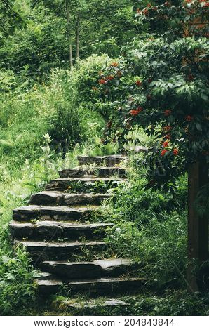 Stone stairs in the park with green trees and grass. Natural travel concept