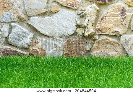 Beautiful Green grass against a stone wall background.