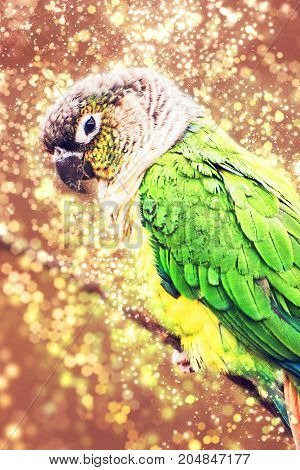Beautiful colorful parrot with shimmering background. Beauty in nature. Red photo filter.