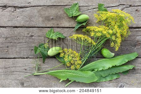 Flowering dill umbrellas horseradish and currant leaves cucumbers on old wooden boards