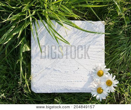 White square stone block with three chamomiles on green grass. Copy space and background. Top view