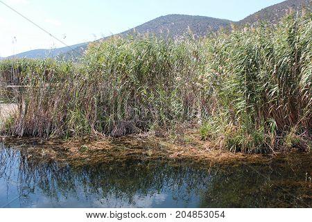 Plants at Prespes Lake Florina northern Greece