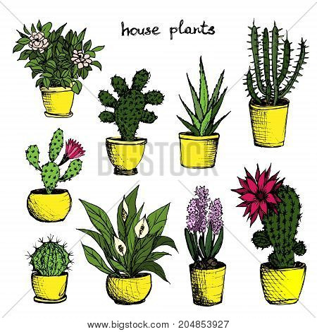 House Plants - Set Of 9 Color Hand-Drawn Plants