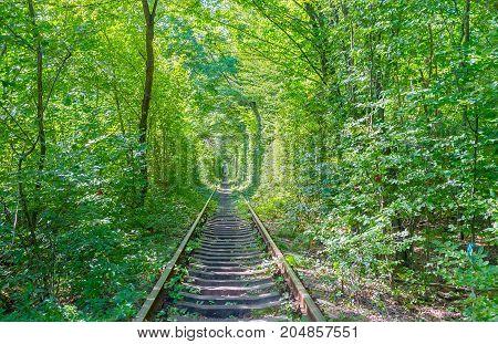 The Nature Along Railroads