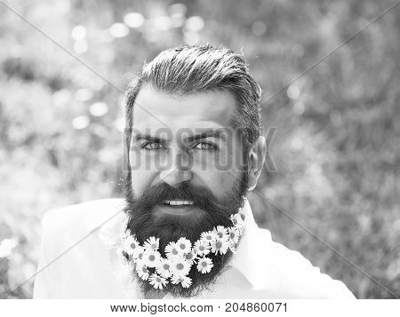 Handsome hipster man brunette with daisy flowers in beard and smiling face in black shirt with elegant mustache and stylish hair sunny day outdoor