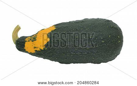 Large Dark Green Ornamental Gourd With Orange Patch