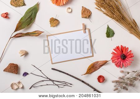 Paper Card Composed With Autumn Dry Plants