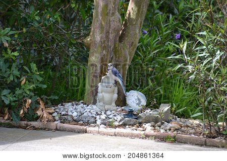 a blue jay eating out of a bird feeder
