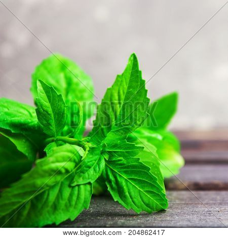 Fresh green organic basil on grey wooden table square shot